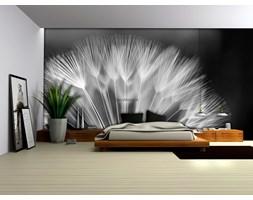 Fototapeta na fizelinie - Czarno biały dmuchawiec